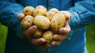 kartofler i ovn